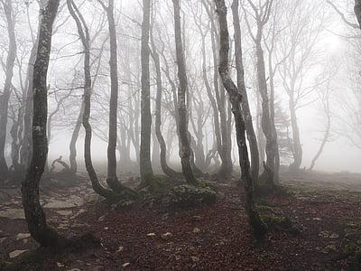 landscape photo of trees during fog