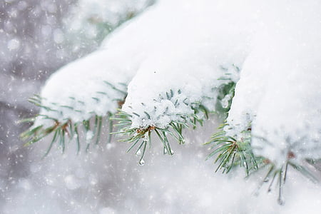 snow covered green leaf