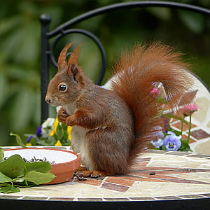 brown squirrel on table