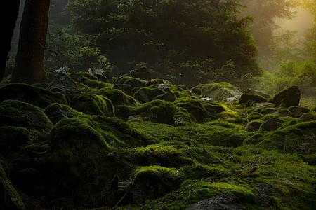 green grass at forest
