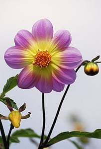 purple-and-yellow petaled flowers