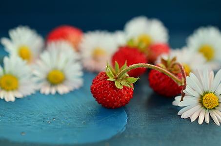 close up photo of three red strawberries