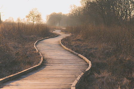 wooden pathway surrounded with trees