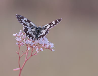 focus photography of paperkite butterfly perched on white petaled flower