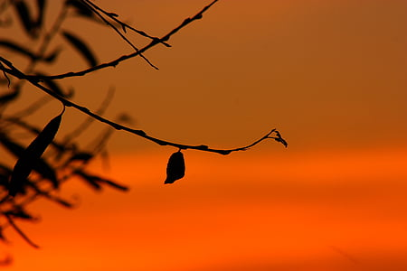 silhouette photo of tree twigs