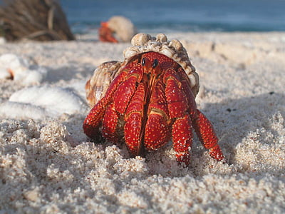 white and red crab on white sand