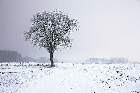 leafless tree covered with snow