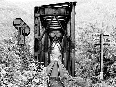 train railroad between tall trees grayscale photo