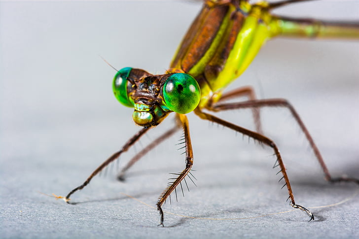 close-up photography of yellow and green dragonfly