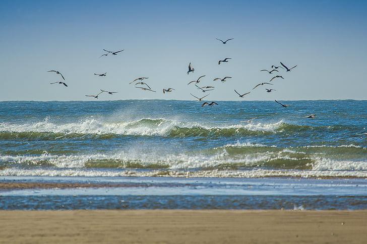 flock of birds flying over sea during daytime