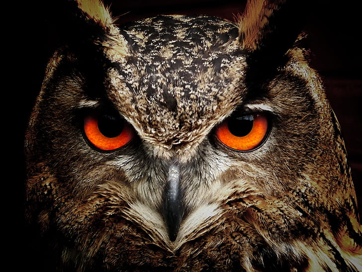 closeup photography of brown and black owl
