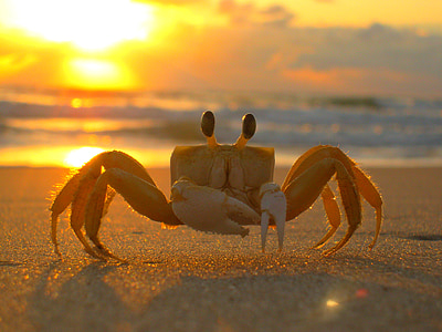 beige crab on shore during golden hour