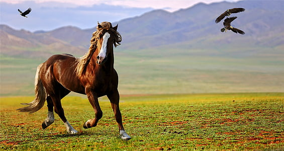 running horse during daytime