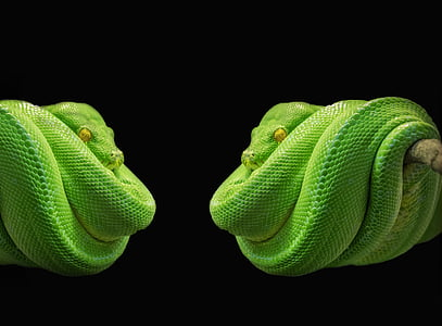 green snake photo collage