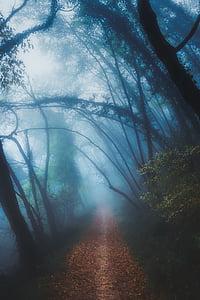brown pathway between trees at daytime
