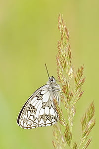 white and black butterfly perched on green leaf plant in closeup photograph
