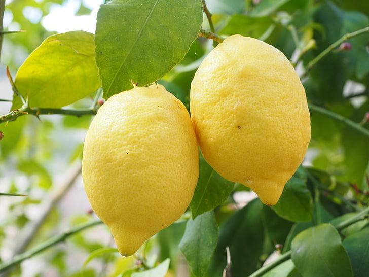 two yellow lemonade fruits