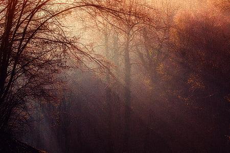 maple leaf tree under sunrise