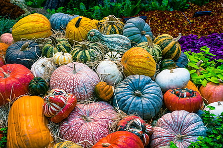 assorted-color of vegetable decor lot