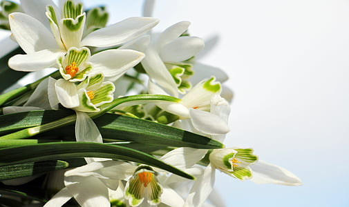 white orchid flower bouquet