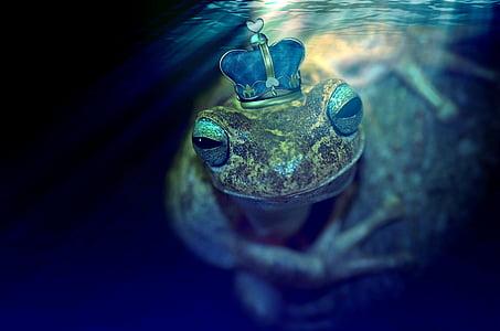 king frog walppaper