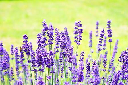 focused photo of purple flowers