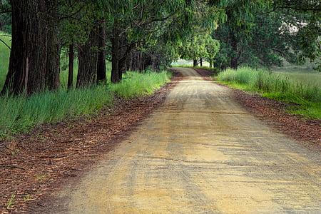 woodland street way during daytime