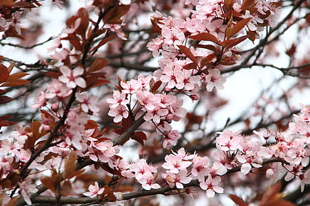 pink cherry blossom during daytime