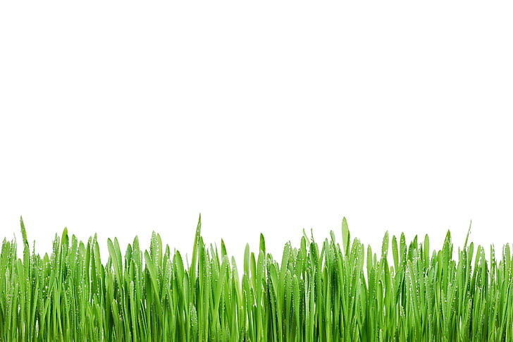 green grasses with white background