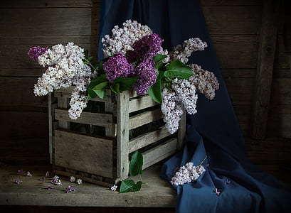 white and purple petaled flowers