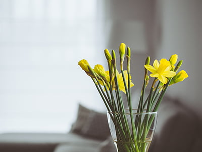 photo of yellow petaled flowers