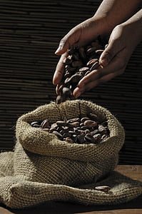 person holding brown seeds