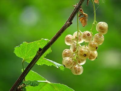tilt shift lens photo of clear berry