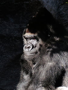 black primate with sun reflection