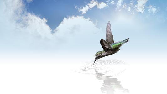 green and black hummingbird at daytime