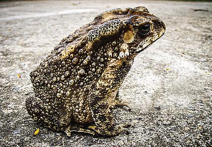 closeup photo of frog