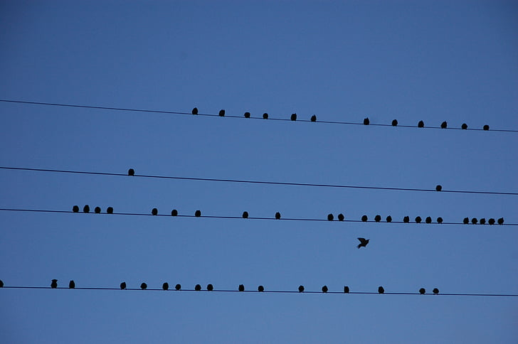 flock of birds perched on wre