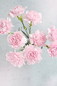 aerial photo of pink flowers on vase