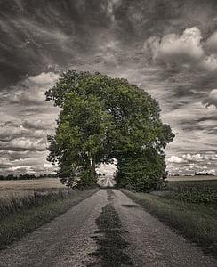 pathway towards arch tree