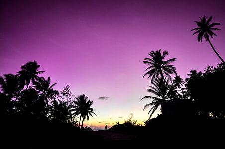 purple sky and tree silhouette photo