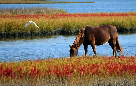 brown horse on red grass field near body of water during daytime