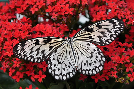 closeup photography of grey and black butterfly