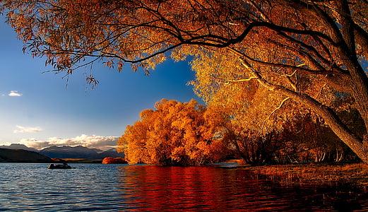 orange tree photo during daytime