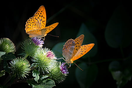 two gulf fritillary butterfly perching on green and purple flower in close-up photography
