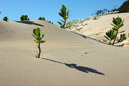 green leaf plant on sand