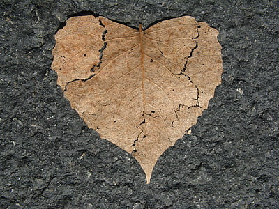 brown dried leaf on gray surface