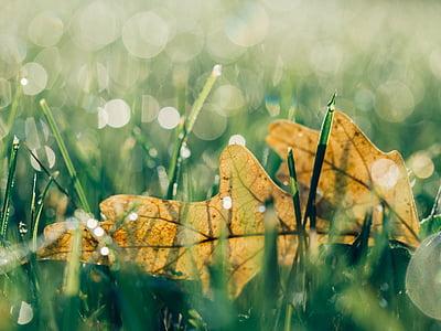 green leaf on green grass