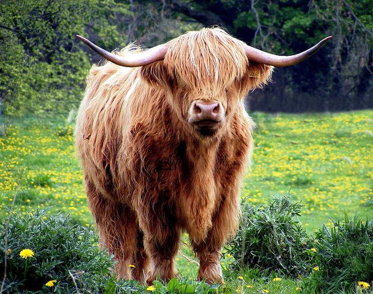 brown yak on green grass field