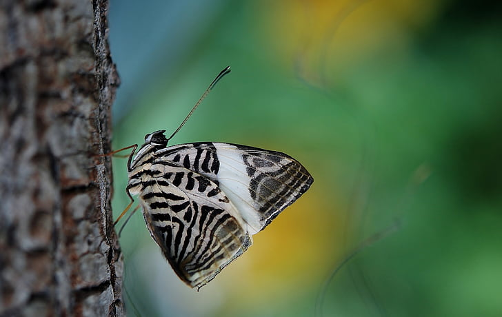 white and black butterfly on brown tree branch