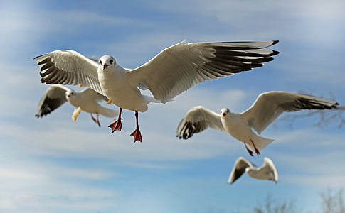 photo of four flying seagulls